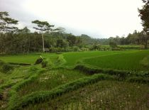 Villa Kelusa, View to Rice Fields